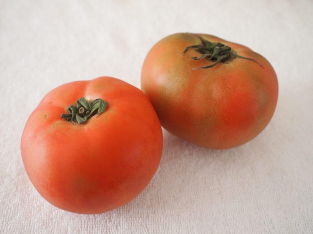 坂ノ途中のトマト